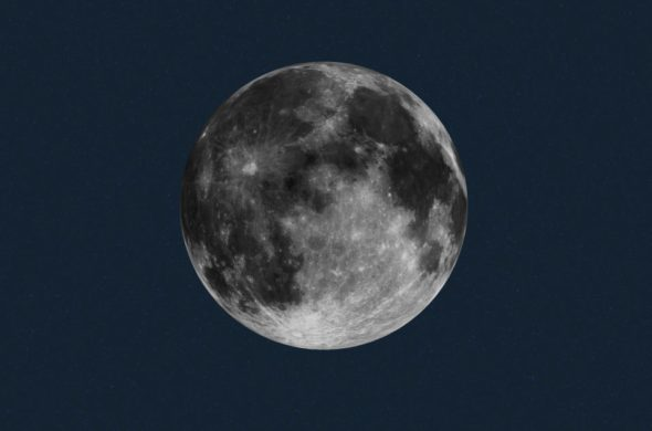 Brota la primera planta en la superficie lunar