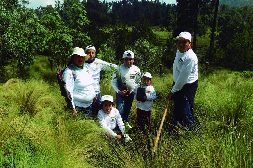 Reforestamos México: salvando los bosques y las selvas de nuestro país - REFORESTEMOS MÉXICO-2