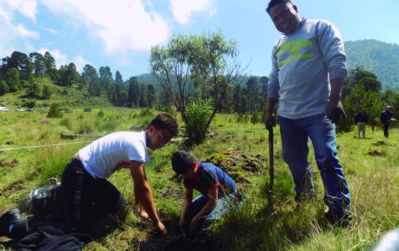 Reforestamos México: salvando los bosques y las selvas de nuestro país - reforestemos-mexico-3
