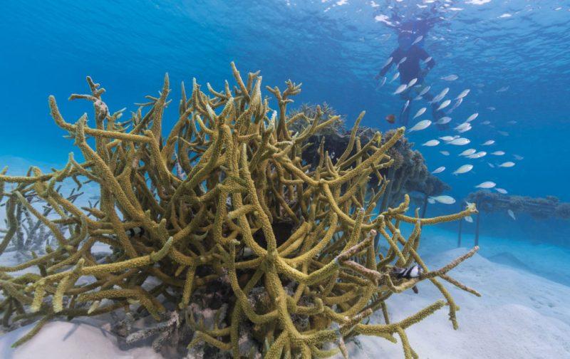 Reef Care, el plan de recuperación de corales heridos - 20160812_coral_planting_00092