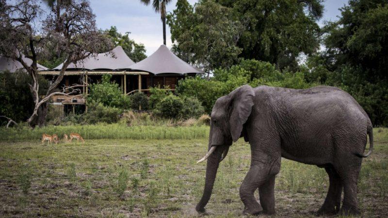 Mombo Camp, el lugar ideal para hospedarte en Botsuana - hotbook20mombo20camp20el20lugar20ideal20par-2