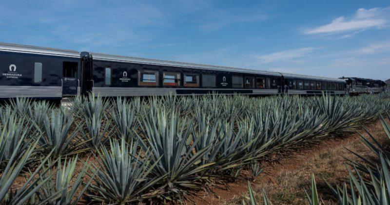 Qué hacer en Guadalajara - hotbook-que-hacer-en-guadalajara-tren-tequila