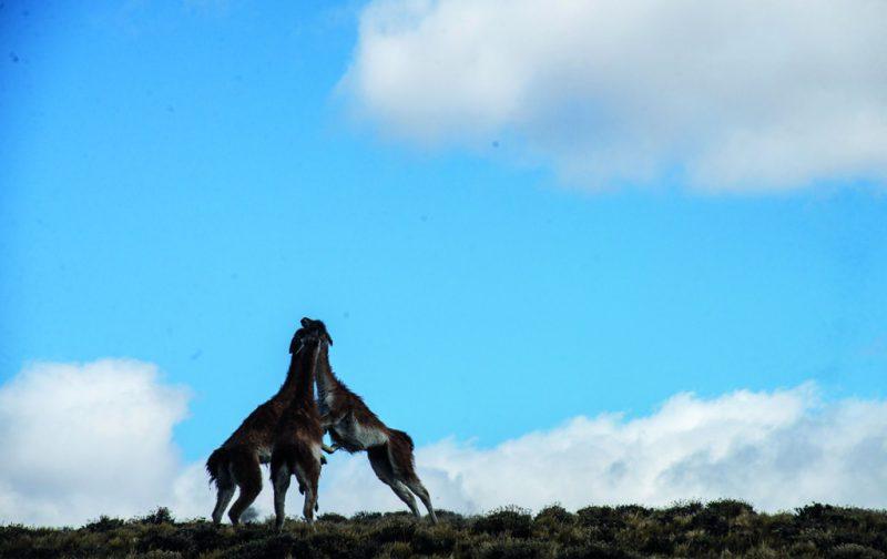 Un viaje por la indomable Patagonia - patagonia-1