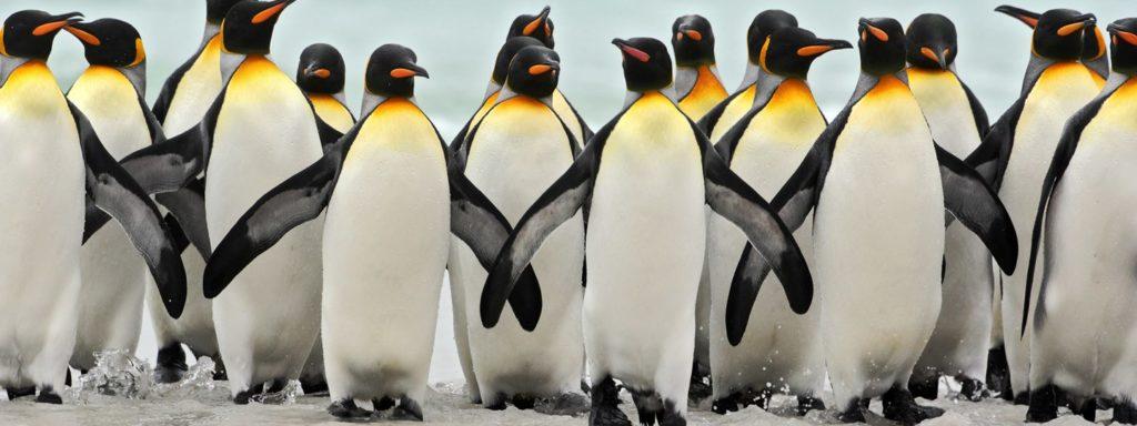 Datos curiosos sobre los pingüinos - Hotbook Datos curiosos sobre los pingüinos portada