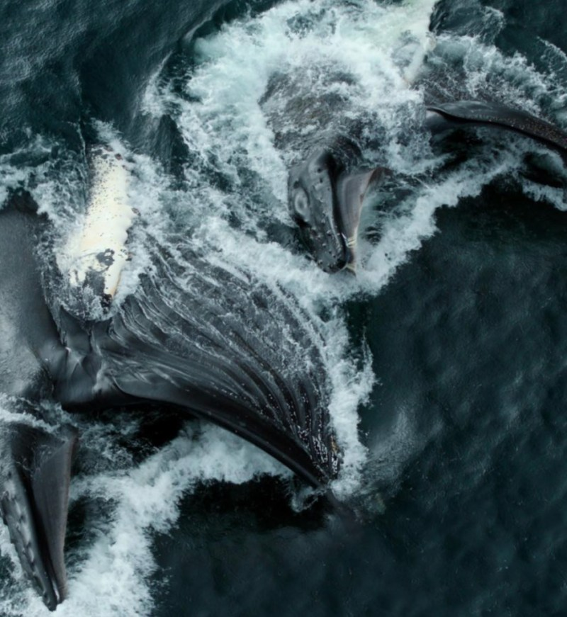 Our Planet, el nuevo documental de Netflix para generar conciencia - ourplanet_ballenas