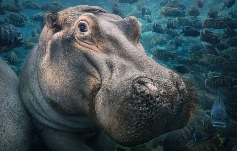 Tim Flach, el fotógrafo que crea conciencia sobre las especies en peligro de extinción - hotbook_timflach_2