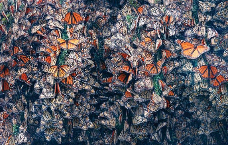 Tim Flach, el fotógrafo que crea conciencia sobre las especies en peligro de extinción - hotbook_timflach_4