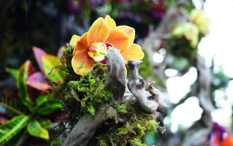FYJA: Polanco en flores - berger-5