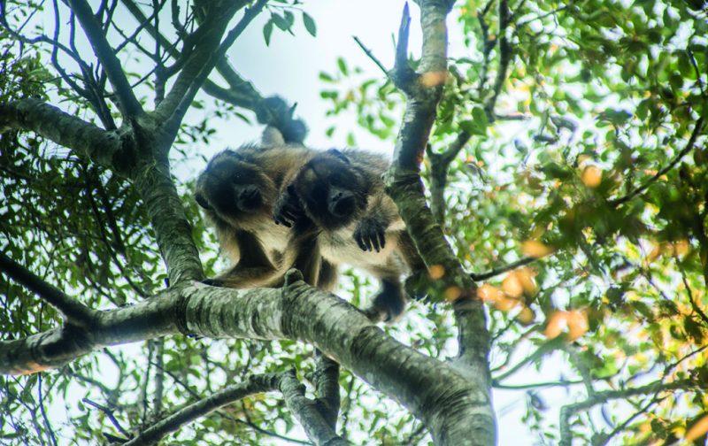 Esteros del Iberá, la nueva joya del conservacionismo - esteros-del-ibera-7