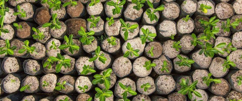 La reforestación puede ayudar a frenar el cambio climático - reforestacion-4