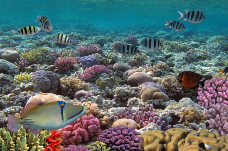 Los mejores lugares para bucear en México - buceomexico_-arrecifemesoamericano