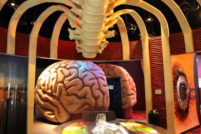 Museos en Houston, Texas que debes conocer - museoshouston_healthmuseum