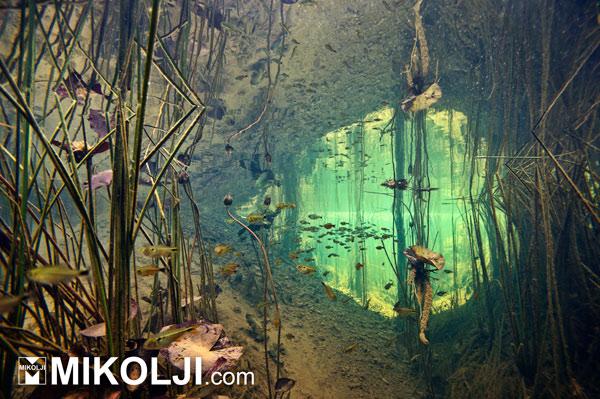 Expo Acuario: un evento a favor de las especies y los ecosistemas acuáticos - expo acuario quinta edicion -print