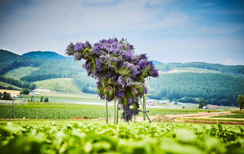 La elegancia exótica de Azuma Makoto - hotbook_azumamakoto_arte_instalacion_escultura_plantas_flores_moradas_campo_verde_cerros_bosque_furano