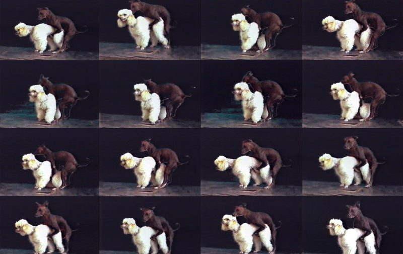 Yoshua Okón vs la metástasis neoliberal - hotbook_yoshuaokon_fotos_chocorrol_perros