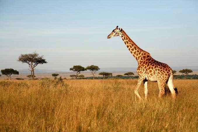 5 destinos imperdibles en África - portada africa