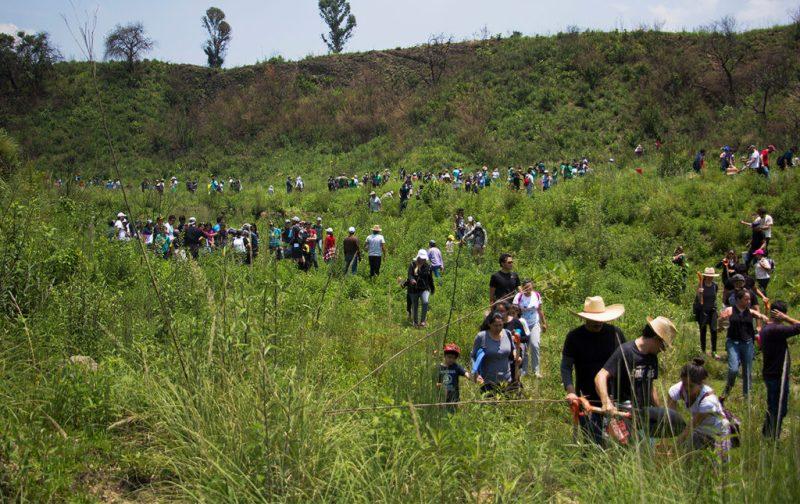 Cómo llevar a cabo una reforestación exitosa - hotbook_ectagono_reforestacion_naturaleza_grupo_comunidad_accion