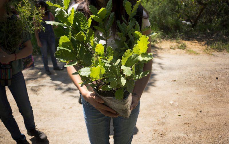 Cómo llevar a cabo una reforestación exitosa - hotbook_ectagono_reforestacion_naturaleza_plantas