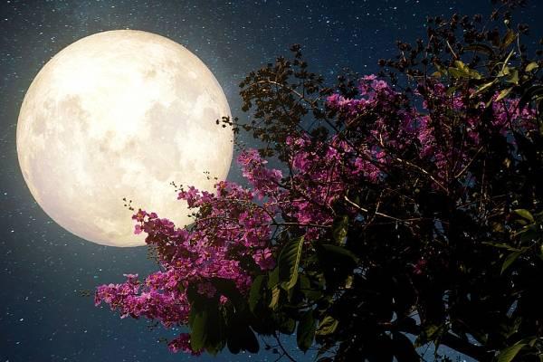 Luna de flores: hoy podrás enamorarte de la luna más brillante del 2020 - Luna de Flores- hoy podrás enamorarte de la luna más brillante del 2020  portada
