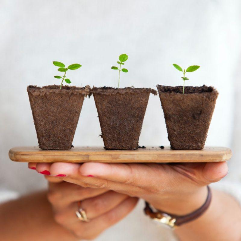 Conoce Toroto, la nueva start-up mexicana que busca reducir la huella de carbono - conoce-toroto-la-nueva-start-up-mexicana-que-busca-reducir-la-huella-de-carbono-medioambiental-sustentable-sustentabilidad-como-reducir-mi-huella-de-carbono-google-zoom-online-instagram-suscripcio-1