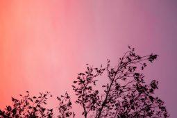 HOT Color: Peach! 20 fotos de color durazno que te transmitirán paz - Portada HOT COLOR Peach 20 fotos de color durazno que te transmitirán paz fotografía google verano viajes summer animales en peligro de extinción google tendencia coronavirus