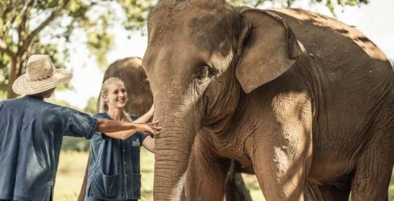 Conoce el hotel que te invita a dormir rodeado de elefantes - 2-1