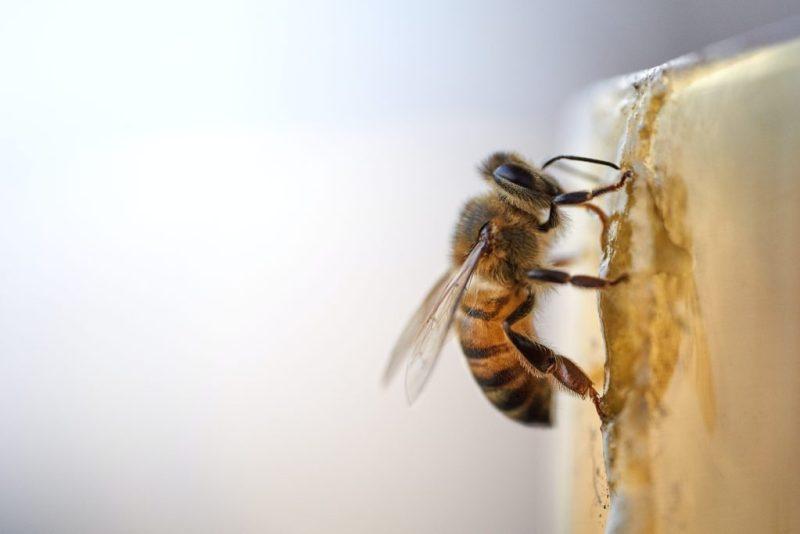 7 beneficios de consumir miel de abeja natural - beneficios-de-consumir-miel-de-abeja-natural-google-hotbook-bazar-online-amazon-intagram-tiktok-amazon-online-coronavirus-covid-19-foodie-honey-miel-de-abeja-miel-organica-5-c