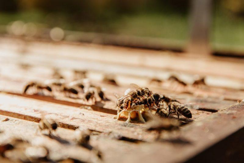 HOTBOOK Ecotalks x Tom's of Maine: la importancia de las abejas - bianca-ackermann-klyzgkme01w-unsplash