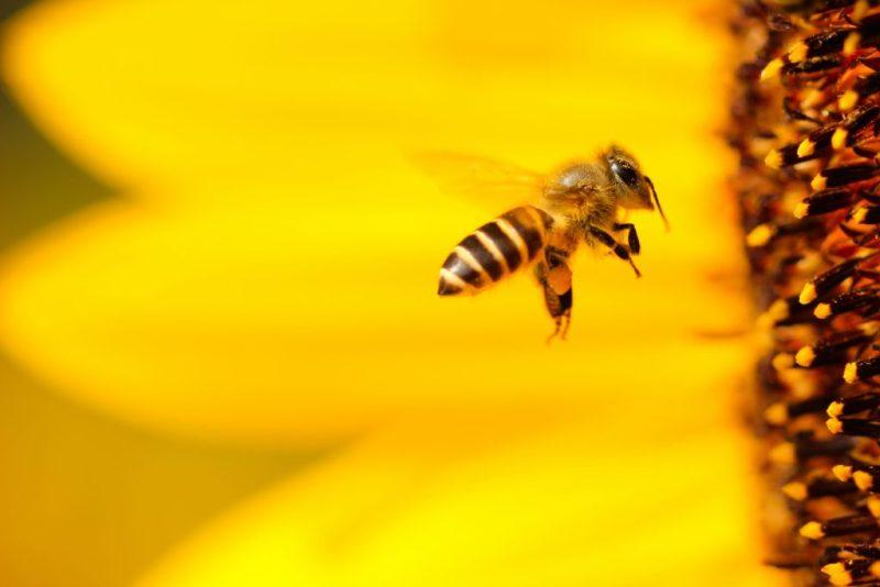 HOTBOOK Ecotalks x Tom's of Maine: la importancia de las abejas - boris-smokrovic-gr7zkoznhxu-unsplash