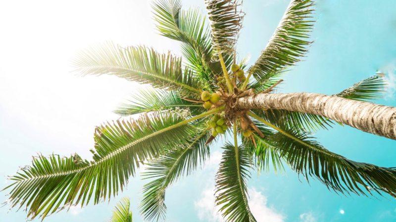 Los destinos más llamativos para volver a visitar en México - los-destinos-mas-llamativos-para-volver-a-visitar-en-mexico-viajar-mexico-cdmx-coronavirus-covid-19-viajes-nueva-normalidad-destino-a-donde-ir-donde-viajar-como-viajar-que-necesitas-para-v