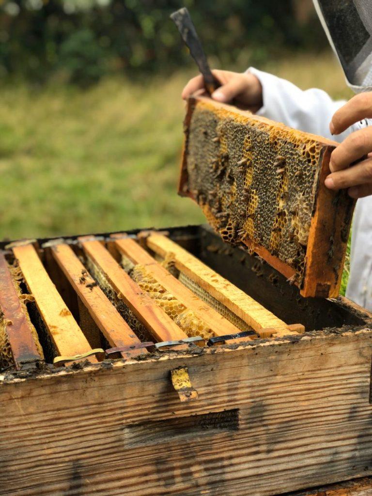 8 datos curiosos sobre las abejas - whatsapp-image-2019-11-16-at-13-29-57