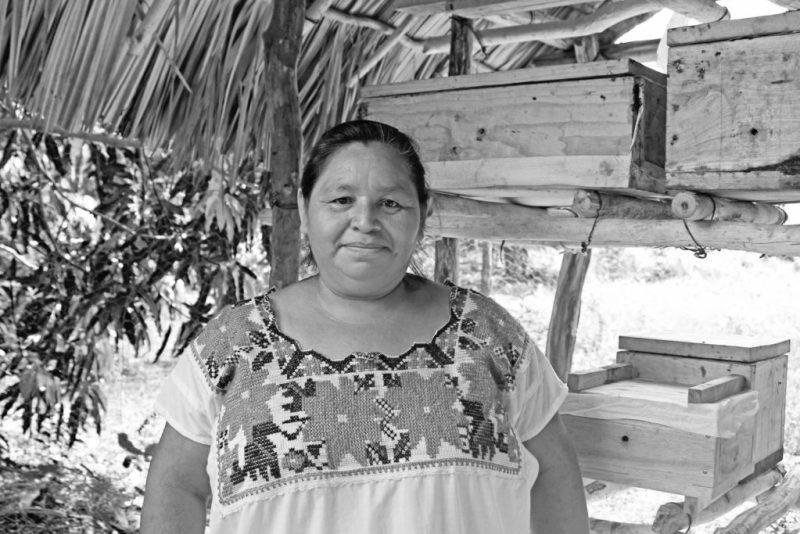 Muuk 'Kaab, la miel de abeja orgánica, sustentable y orgullosamente mexicana - mukab-la-miel-de-abeja-organica-sustentable-y-orgullosamente-mexicana-miel-honey-foodie-instagram-tiktok-google-amazon-miel-de-abeja-organica-mercado-libre-navidad-cena-de-navidad-ancc83o-nuev-1