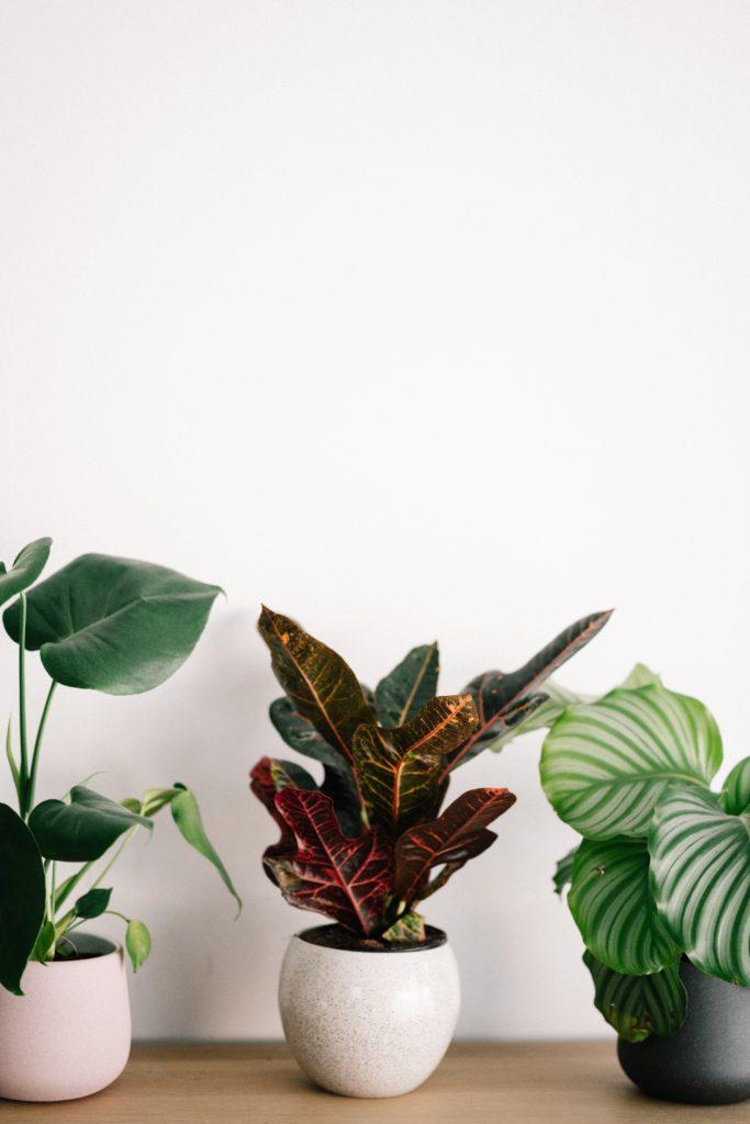 Go green! Plantas para tener un imperdible jardín interior - foto-1-plantas-para-tener-un-imperdible-jardin-interior
