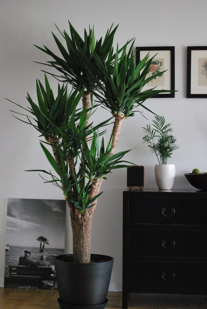 Go green! Plantas para tener un imperdible jardín interior - link-trono-de-brasil-plantas-para-tener-un-imperdible-jardin-interior