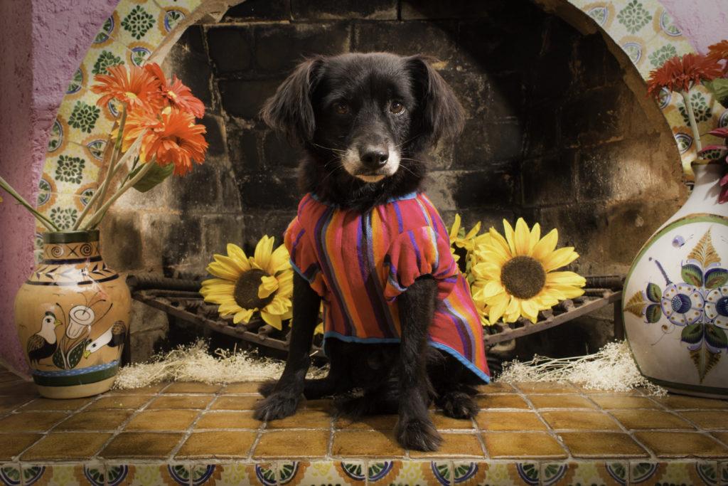 La línea mexicana que tiene todo para tus mascotas: El Rebozo de Dolce - LA LÍNEA MEXICANA QUE TIENE TODO PARA TUS MASCOTAS EL REBOZO DE DOLCE UEFA CHAMPIONS LEAGUE 1