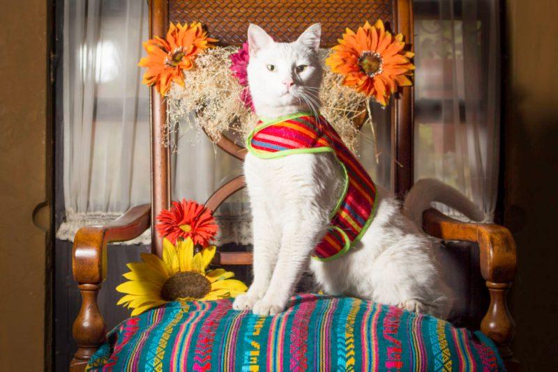 La línea mexicana que tiene todo para tus mascotas: El Rebozo de Dolce - la-linea-mexicana-que-tiene-todo-para-tus-mascotas-el-rebozo-de-dolce-uefa-champions-league-3