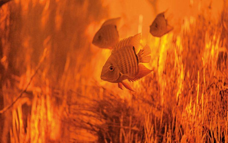 Ivan Mikolji - orange-fish-ivan-mikolji
