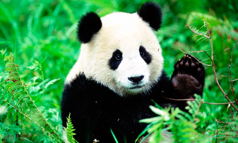 Animales que ya no se encuentran en peligro de extinción