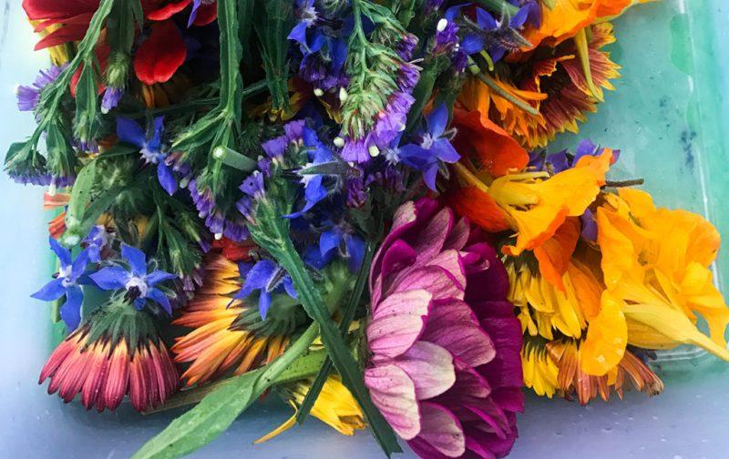 Una receta con ingredientes de Xochimilco - flores-colores-cultivo-huerto-xochimilco-mexico