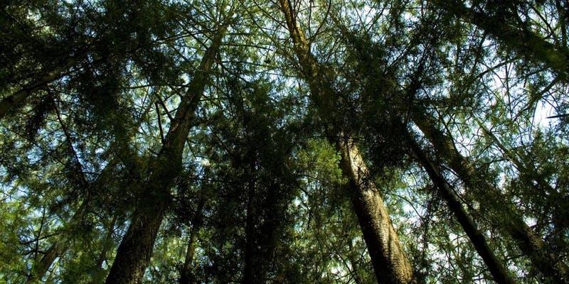 La importancia de la reforestación en nuestra era - reforestacion-2
