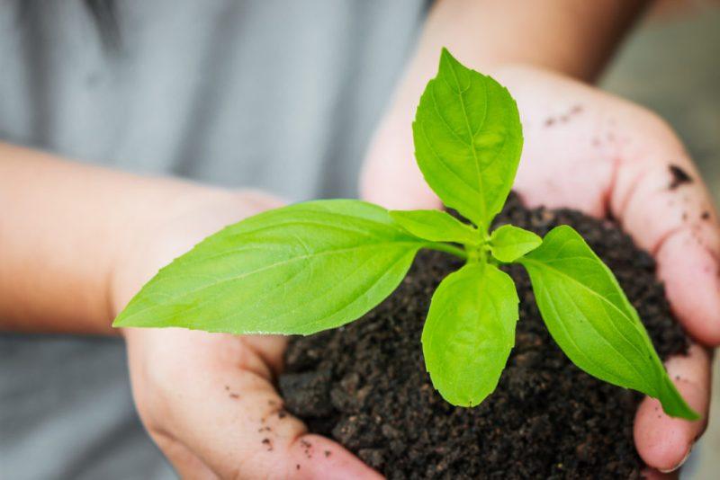 La importancia de la reforestación en nuestra era - reforestacion