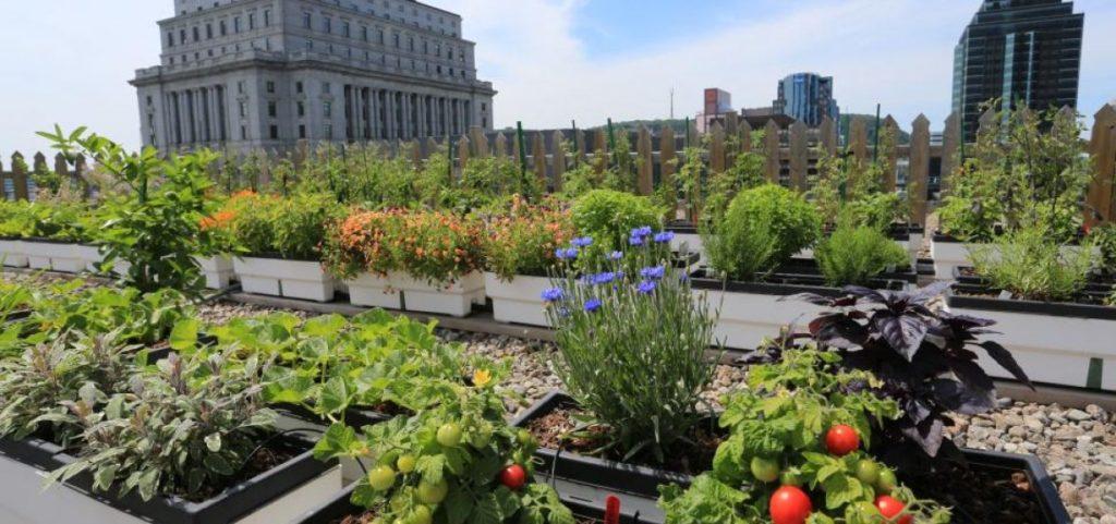 101: cómo crear tu propio huerto urbano