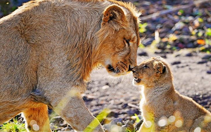 15 fotos que representan el cariño de mamá en la naturaleza - foto-leones-fotos-que-representan-el-carincc83o-de-mama-en-la-naturaleza-zoom-dia-de-las-madres-10-de-mayo-coronavirus