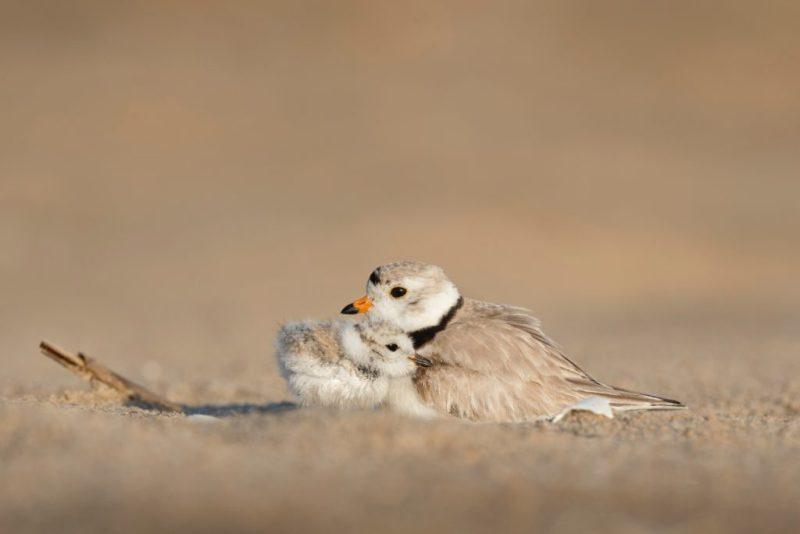 15 fotos que representan el cariño de mamá en la naturaleza - foto-pajaros-fotos-que-representan-el-carincc83o-de-mama-en-la-naturaleza-zoom-dia-de-las-madres-10-de-mayo-coronavirus