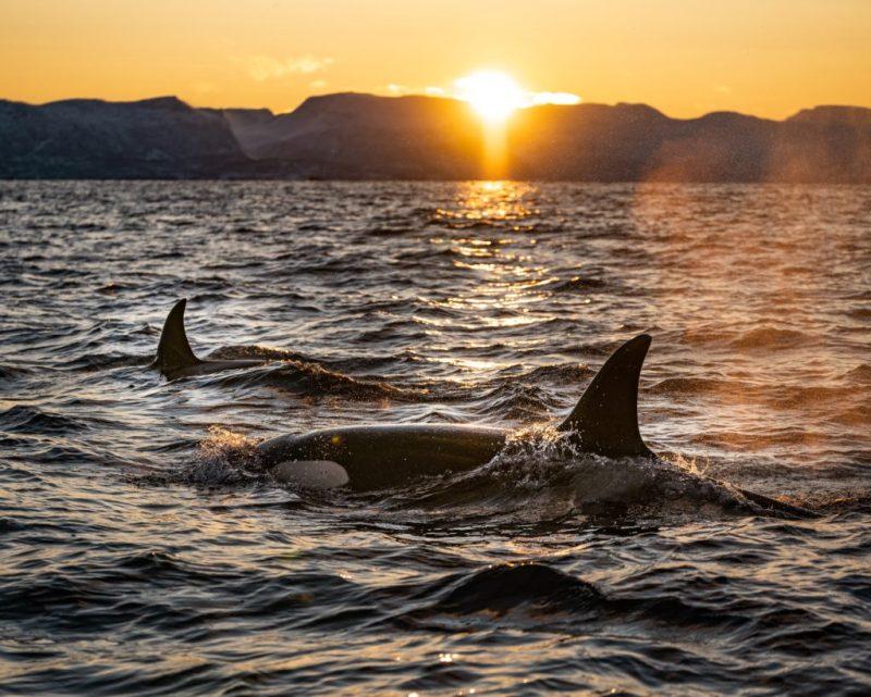 20 fotografías que te harán enamorarte del océano - fotografias-que-te-haran-enamorarte-del-oceano-google-fotos-google-zoom-online-google-meet-instagram-naturaleza-animales-en-peligro-de-extincion-oceano-cuidado-por-el-oce-18