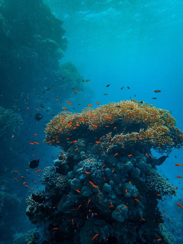 20 fotografías que te harán enamorarte del océano - fotografias-que-te-haran-enamorarte-del-oceano-google-fotos-google-zoom-online-google-meet-instagram-naturaleza-animales-en-peligro-de-extincion-oceano-cuidado-por-el-oce-19