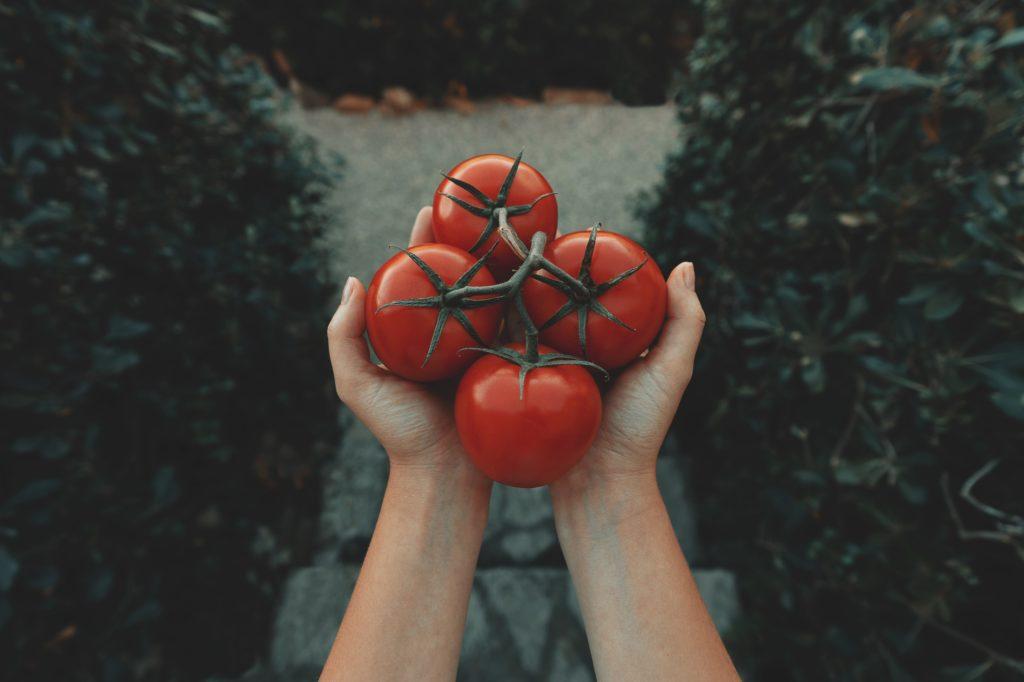 Sitopia, cultivando tus propios alimentos en casa