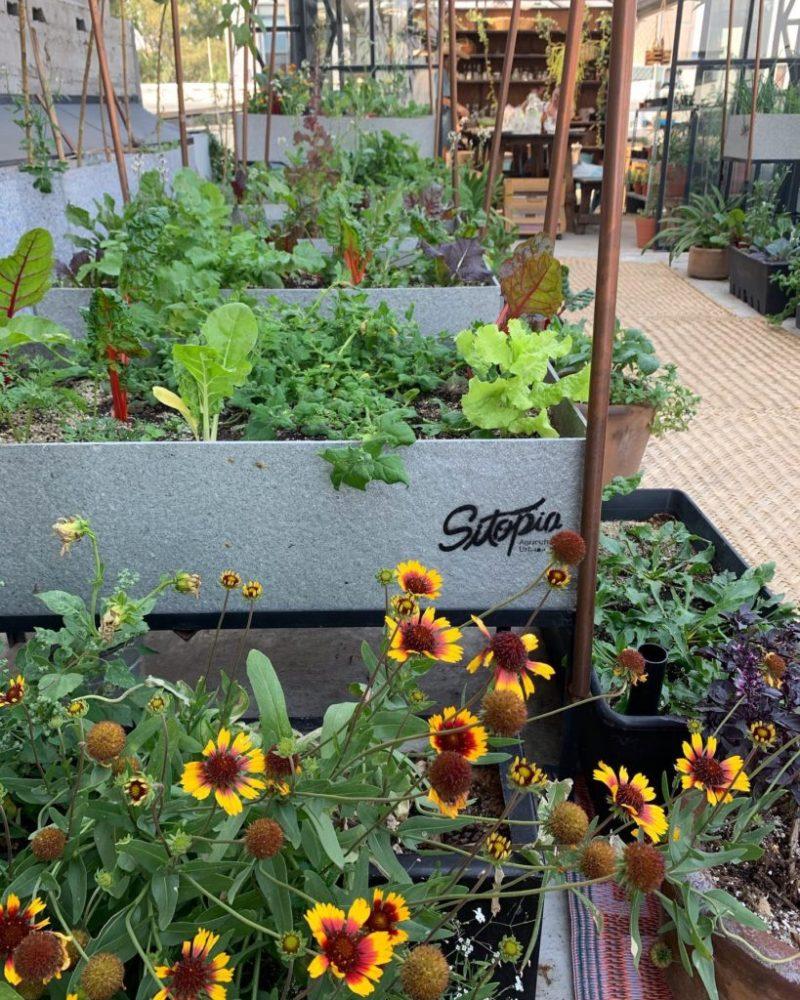 Sitopia, cultivando tus propios alimentos en casa - sitopia-1