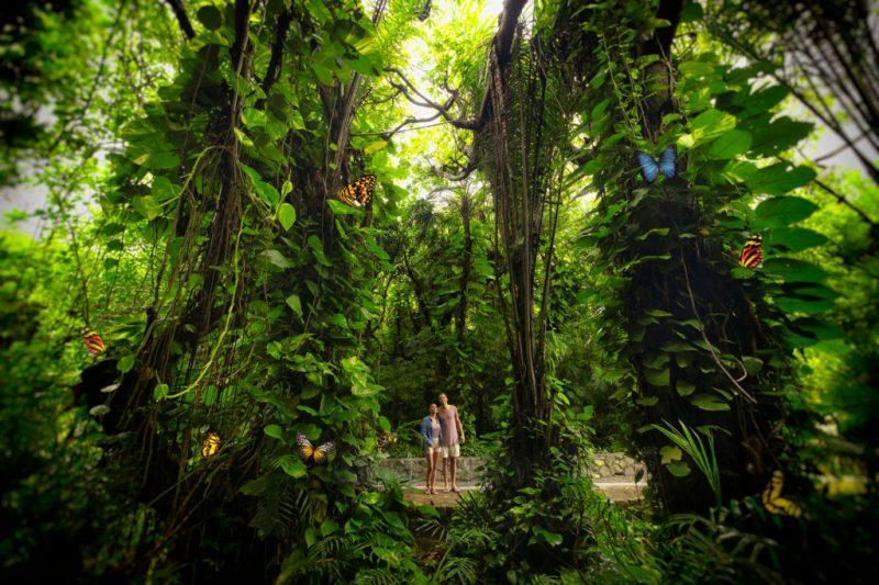 Xcaret, un majestuoso paraíso que te invita a disfrutar de unas vacaciones incomparables - foto-xcaret-7