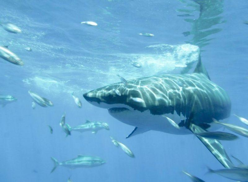 Impactantes fotografías de la vida marina, un mundo bajo el agua repleto de magia - foto-5-dia-del-oceano-dia-del-oceano-mar-ecologia-dia-del-oceano-fernanda-narchi